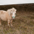 White Pony in nature - Stock fotografie