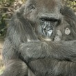 Gorilla Mother and the baby — Stock Photo #8198653