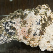 Stock Photo: Chalcopyrite, Quartz, Calcite and Sphalerit