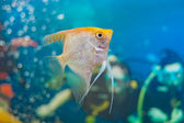 Aquarium small fishes. — Stock Photo