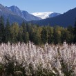 Mendenhall glacier — Photo #8599271