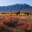 Stock Photo: Kluane National Park