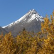 St. Elias Mountains — Stockfoto