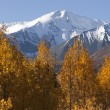 St. Elias Mountains — 图库照片 #8724554