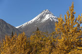 St. Elias Mountains — Stock fotografie
