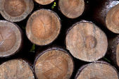 Wooden logs 9 — Stock Photo