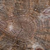 一个木制的日志 2 特写 — 图库照片