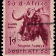 South Africa Postage Stamp Black Wildebeest 1954 - Stock Photo
