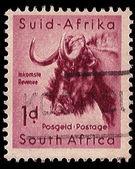 South Africa Postage Stamp Black Wildebeest 1954 — Stock Photo