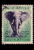 South Africa Postage Stamp African Elephant 1954 — Stock Photo
