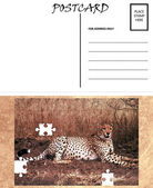 Empty Blank Postcard Template Africa Cheetah Puzzle Image — Stock Photo