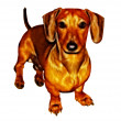 Stock Photo: Isolated Crayon Drawing Painting of Miniature Dachshund