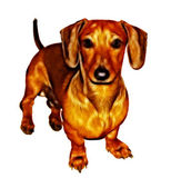 Isolated Crayon Drawing Painting of Miniature Dachshund — Stock Photo