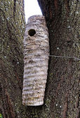 Sisal Nesting Log for Woodpeckers — Foto Stock