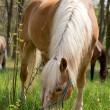 Most beautiful horse in woods. — Stock Photo #10627825