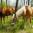 Royalty-Free Stock Photo: Two horses grazing in the forest.
