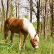 Royalty-Free Stock Photo: Horses graze in the forest edge.