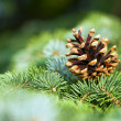 Leaves of the pine forest of trees. — Stock Photo #10628213