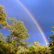 Rainbow in the sky, the trees above. — Stok fotoğraf #10628270