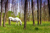 The most beautiful horse in the woods — Stock Photo