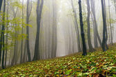Fallen leaves in autumn forest and mysterious fog. — Stock Photo