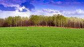Fält och skog i bakgrunden molnen. — Stock fotografie