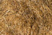 Straw bale arranged. — Stock Photo