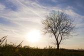 Jedno drzewo sam, tło i pochmurny dzień. — Zdjęcie stockowe