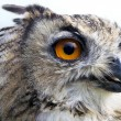 Owl eye — Stock Photo #10634073