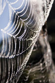 Cobweb — Stock Photo