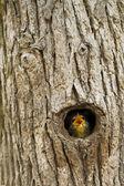 Piszczałka — Zdjęcie stockowe