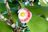 De exotische bloem groeien op een boom — Stockfoto
