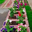 Flower bed and lawn near office buiding. Selective focus. — Foto Stock