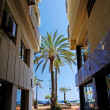 Palm between hotels. Mediterranean city Lloret de Mar, Spain. — Stock Photo