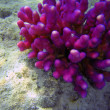 Beautiful coral reef close up underwater photography. — Foto de Stock   #7993028