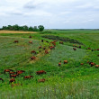 Horses herd in steppe. Animal wildlife landscape. — Stock Photo