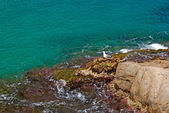 Rock v hluboké čisté mořské vody. seascape lloret de mar pobřeží, s — Stock fotografie