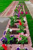 Lecho de flores y césped junto a la oficina buiding. enfoque selectivo. — Foto de Stock