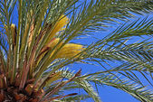 Green palm tree and bright blue clear summer sky. — Stock Photo