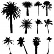 Collection of vector palm trees silhouettes. Easy to edit, any s — Stock Vector #7992006