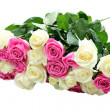 图库照片: White and pink roses with water drops isolated on white backgrou