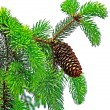 Stock Photo: Branch of pine tree with cone isolated on white background.