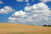 Field of wheat and blue sky with clouds, Europe. — Stock fotografie