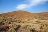 Vulkanische landschap van el teide vulkaan eiland tenerife, canarische. — Stockfoto