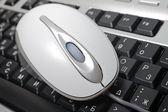 Mouse laying on keyboard macro photography. — Stock Photo