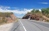 Carretera vacía y olivos, portugal. — Foto de Stock