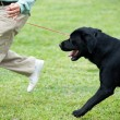Master playing with his dog — Stock Photo