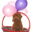 Dog in basket — Stock Photo