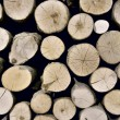 Pile of logs — Stock Photo #10355004