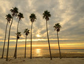 Palms on a Beach — Stock Photo